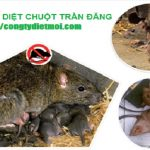 Dich-vu-diet-chuot