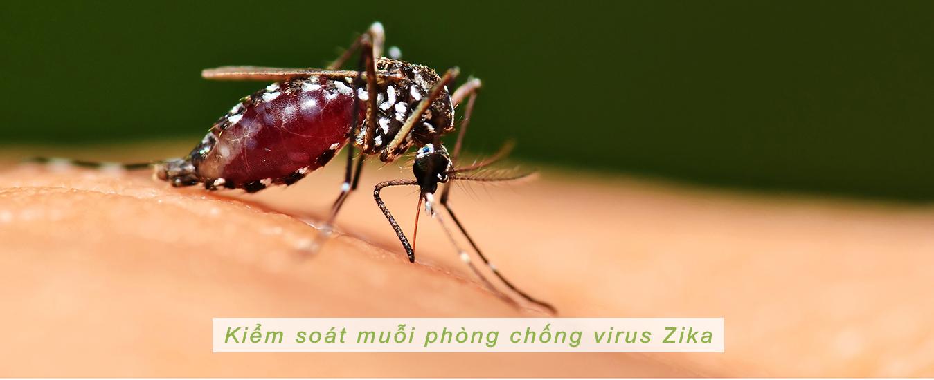 Dịch vụ diệt muỗi tại Nam Định