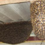 Công ty diệt tổ ong tại nhà
