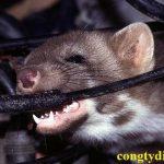 Diệt chuột tận gốc tại Bà Rịa - Vũng Tàu