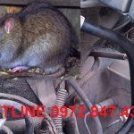 Dịch vụ phòng, chống chuột và đuổi chuột trên xe ôtô