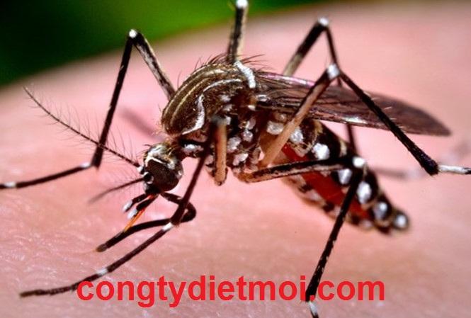 Dịch vụ diệt muỗi tại quận Taan Phú
