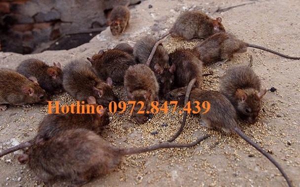 Công ty diệt chuột giá rẻ tại Quảng Trị