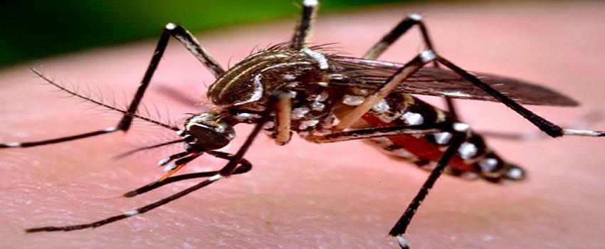 Dịch vụ diệt muỗi tận gốc huyện Gia Lâm