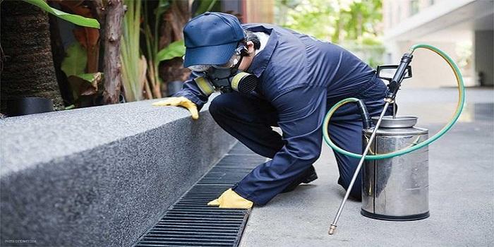 Dịch vụ diệt muỗi quận Hai Bà Trưng