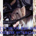 Đơn vị diệt chuột uy tín tại Bạc Liêu