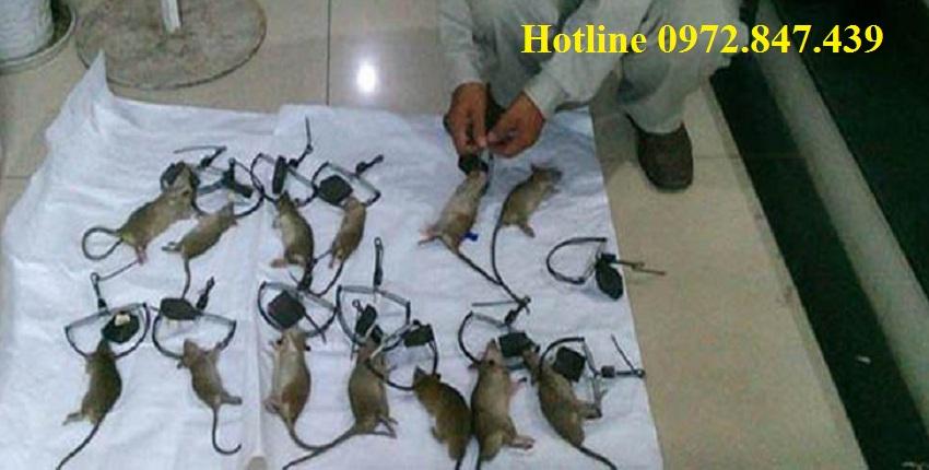 Dịch vụ diệt chuột chuyên nghiệp tại Hà Tĩnh
