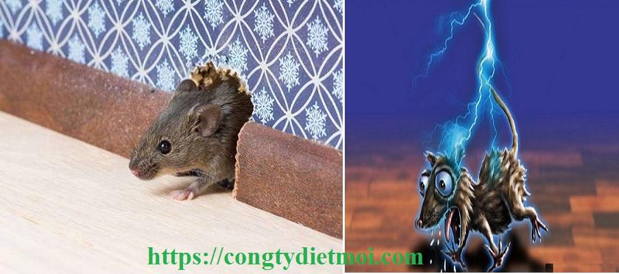 Dịch vụ diệt chuột giá rẻ tại Khánh Hoà