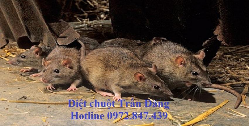 Dịch vụ diệt chuột tại Nghệ An