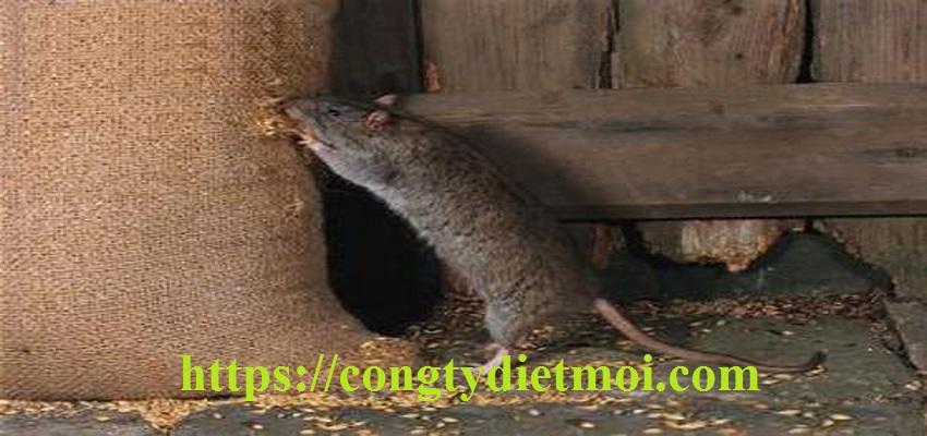 Công ty diệt chuột huyện Nhà Bè