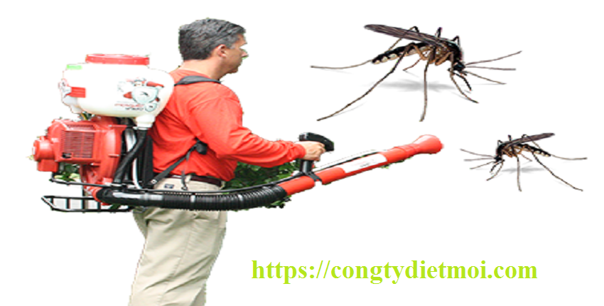 Dịch vụ diệt muỗi tận gốc quận Hà Đông