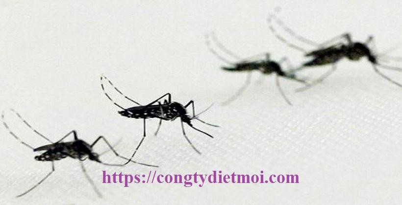 Dịch vụ diệt muỗi tận gốc huyện Thạch Thất
