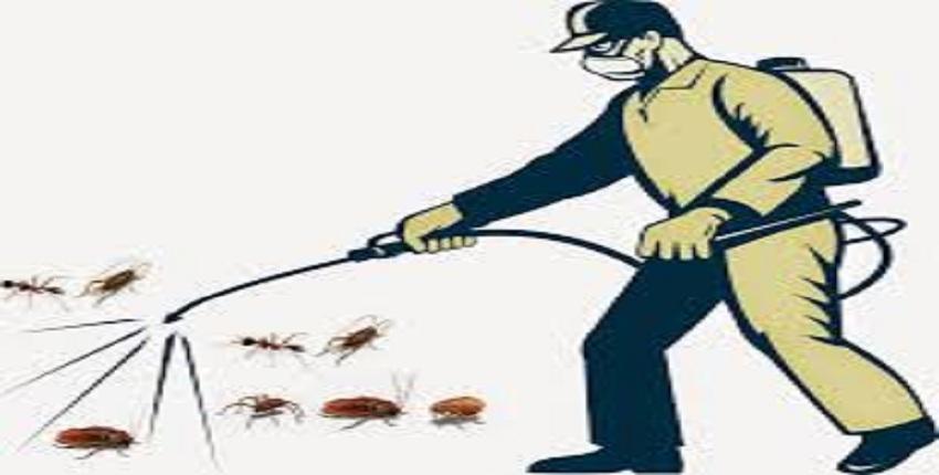 Công ty diệt ruồi tận gốc tại Hà Nội