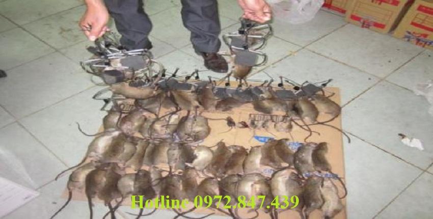 Dịch vụ diệt chuột tỉnh Quảng Nam