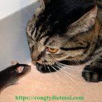 Dịch vụ diệt chuột tại Quảng Ngãi