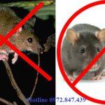Công ty diệt chuột tại Bình Định