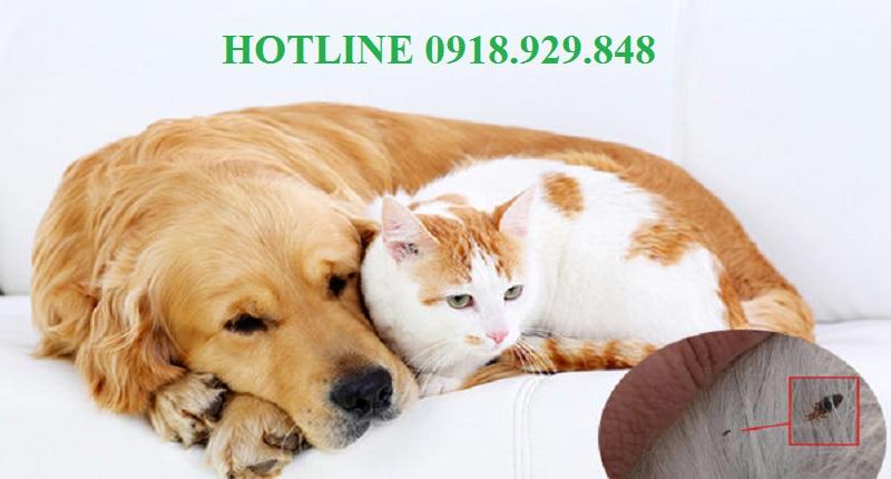 Dịch vụ diệt ve chó, bọ chét tại Hà Nội