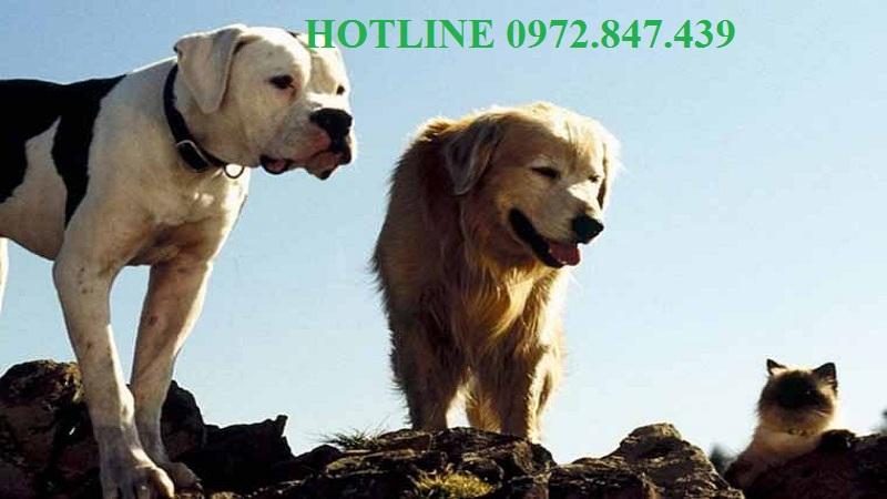 Dịch vụ diệt ve chó tại thành phố Hồ Chí Minh