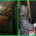 Công ty bắt ong tại Hà Nam