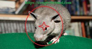 Công ty diệt chuột Tiền Giang