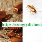 Công ty diệt gián tại Thái Nguyên
