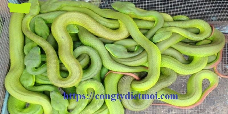 Công ty diệt rắn tại Đồng Nai