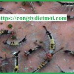 Công ty diệt sâu tại tỉnh Bình Phước