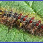 Cơ sở phun diệt sâu lông tại Bà Rịa – Vũng Tàu