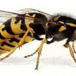 Dịch vụ bắt tổ ong tỉnh Hưng Yên