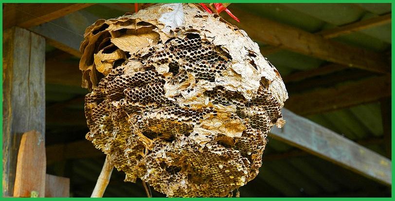Dịch vụ diệt ong tại Bình Dương