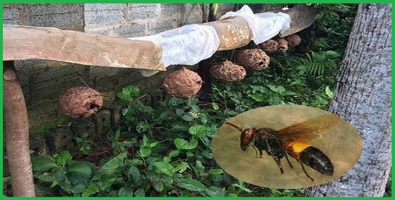 Dịch vụ diệt ong tại TP.HCM