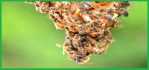 Trung tâm bắt ong tại thành phố Đà Nẵng