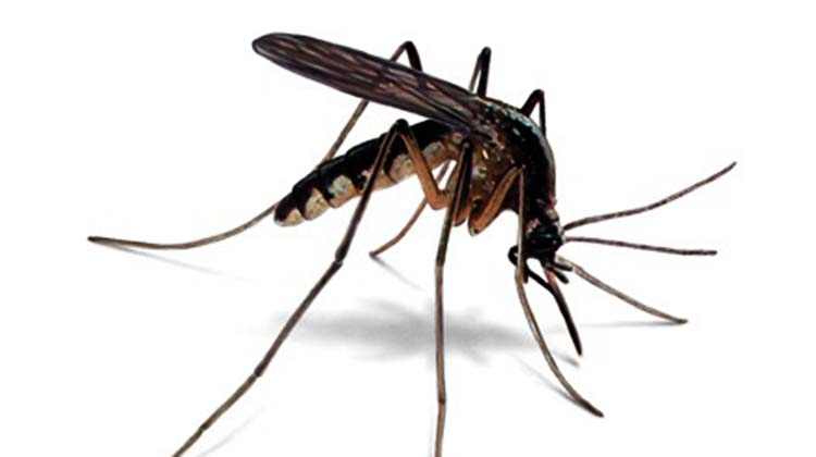 phun thuốc diệt muỗi tại Hà Nam